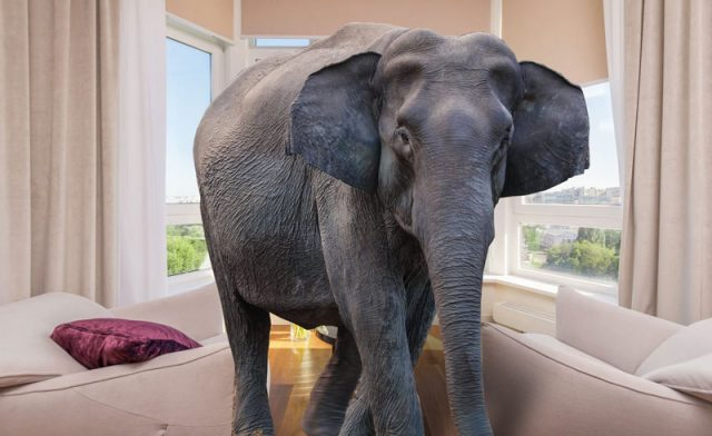 Why NDR? See the Entire Elephant in the Room